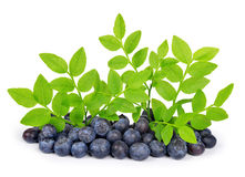 Blueberries with green leaf Royalty Free Stock Image