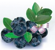 Group Bog Whortleberry Blueberries Stock Photo