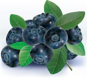 Blueberries group with leaves on white Royalty Free Stock Photos