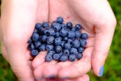 Blueberries in the hands of Royalty Free Stock Photo
