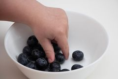 Blueberries in the hands of a child. child`s hand takes blueberries from a white bowl on a white background stock images