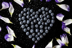 Blueberries heart with flower petals from above on black Stock Image