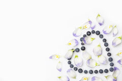 Blueberries heart with petals from above on white in corner Royalty Free Stock Photos