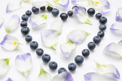 Blueberries heart with petals from high angle on white Royalty Free Stock Photo