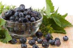 Blueberries - horizontal royalty free stock image