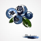 Blueberries, huckleberries Royalty Free Stock Photo
