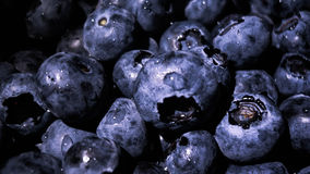 Blueberries. Royalty Free Stock Photos