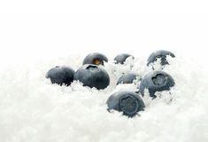 Blueberries in ice. Studio macro of fresh ripe blueberries buried in fresh snow. Copy space Royalty Free Stock Photos