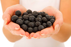 Blueberries In The Hands Royalty Free Stock Photos