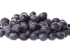 Blueberries Isolated Stock Image