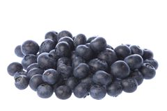 Blueberries Isolated Royalty Free Stock Photo