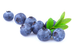 Blueberries isolated Stock Images