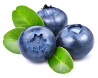 Blueberries Stock Images