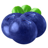 Blueberries isolated on white background, with clipping path. Fruit blueberries isolated on white background as package design element. Healthy eating stock photography