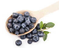 Blueberries,. Isolated white Stock Image