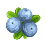 Blueberries isolated on white. Vector illustration. Stock Photo