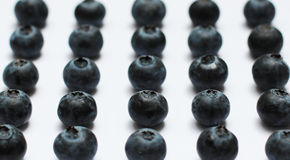Blueberries. A large plate of ripe forest blueberries Stock Image