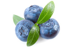 Blueberries with leaf Royalty Free Stock Photo