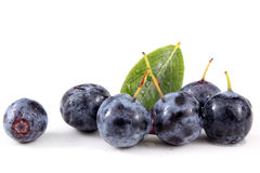 Blueberries with leaf Royalty Free Stock Photography