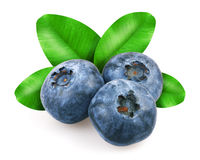 Blueberries with leafs Stock Image