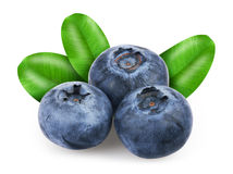 Blueberries with leafs Stock Photography
