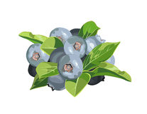 Blueberries with leaves Royalty Free Stock Photo