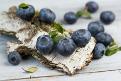 Blueberries with leaves on birch bark, closeup Royalty Free Stock Photography