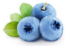 Blueberries with leaves. File contains clipping paths. Stock Photos