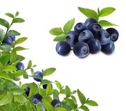 Blueberries_leaves_frame Royalty Free Stock Images