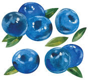 Blueberries with leaves Stock Images