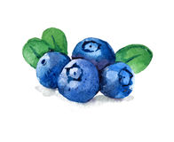 Blueberries with leaves, watercolor illustration Stock Images