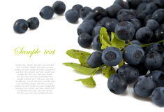 Blueberries with leaves on white Royalty Free Stock Photography