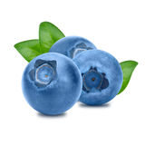 Blueberries with leaves on white background Royalty Free Stock Photo