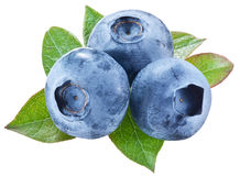 Blueberries with leaves on a white background. Royalty Free Stock Images