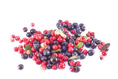 Blueberries and Lingonberries isolated Royalty Free Stock Image