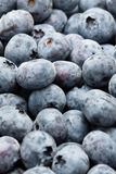 Blueberries. A lot of blueberries close up Royalty Free Stock Photos