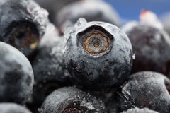 Blueberries. Macro. Closeup view. Shallow depth of view. Royalty Free Stock Photography