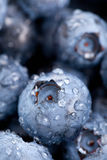 Blueberries macro Stock Images