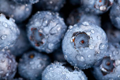 Blueberries macro Stock Photography