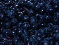 Blueberries. Macro of fresh washed blueberries Royalty Free Stock Image