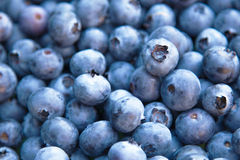 Blueberries macro photo Royalty Free Stock Images