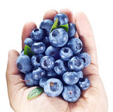 Blueberries in the mans hand over white. Stock Photography