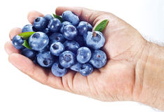 Blueberries in the mans hand over white. Royalty Free Stock Photo