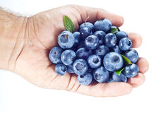 Blueberries in the mans hand over white. Stock Images
