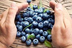 Blueberries in the man's hands. Royalty Free Stock Photography