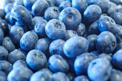 Blueberries. Many blueberries are summer harvest Royalty Free Stock Images