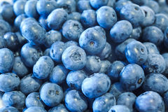 Blueberries. Many blueberries are a summer harvest Royalty Free Stock Images