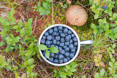 Blueberries in a metal mug Royalty Free Stock Images
