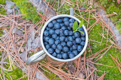 Blueberries in a metal mug Stock Images