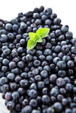 Blueberries with mint Stock Photos